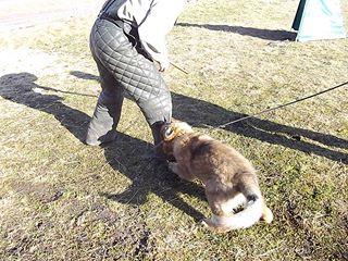 RixDivans första mondioring hund kanske haha