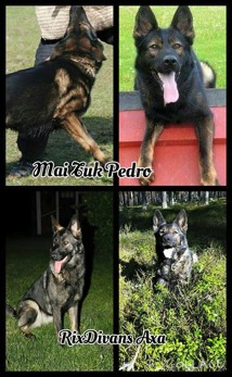Axa och Pedro är föräldrar till F kullen 2015-12-25