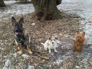 RixDivans Betty Boop med sina två små vänner