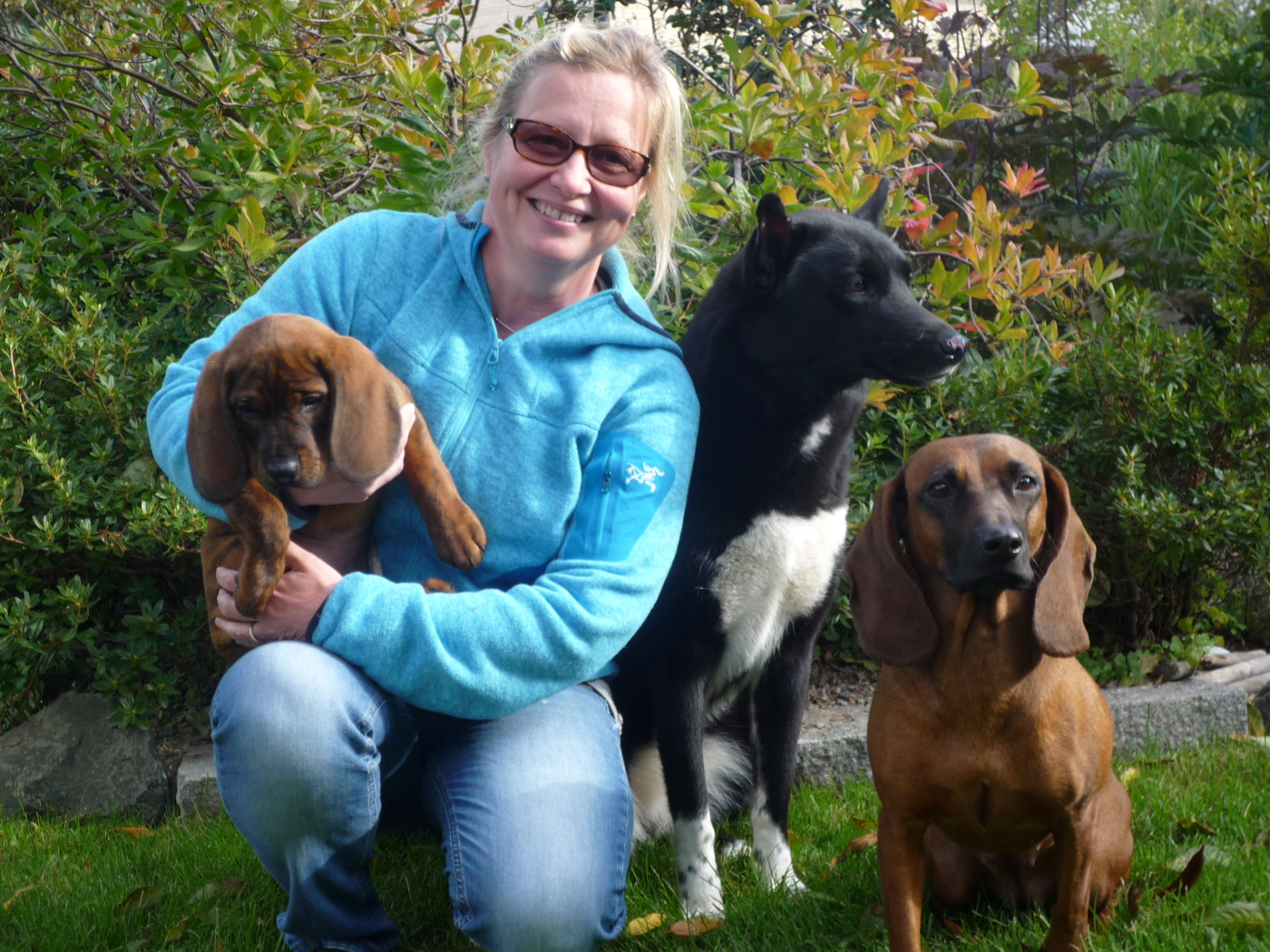 Alla tre hundarna
