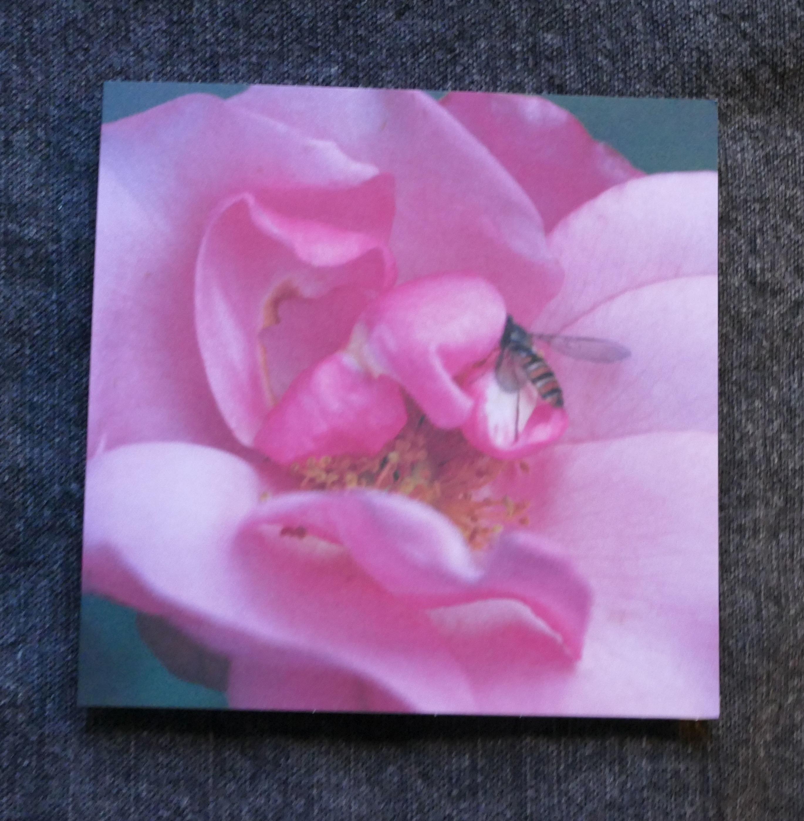 Vivi-Anns ros med blomfluga