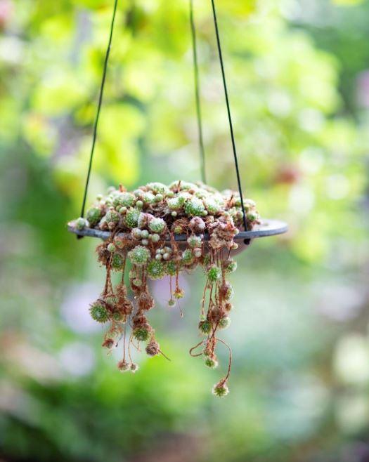 Fågelbad med blommor