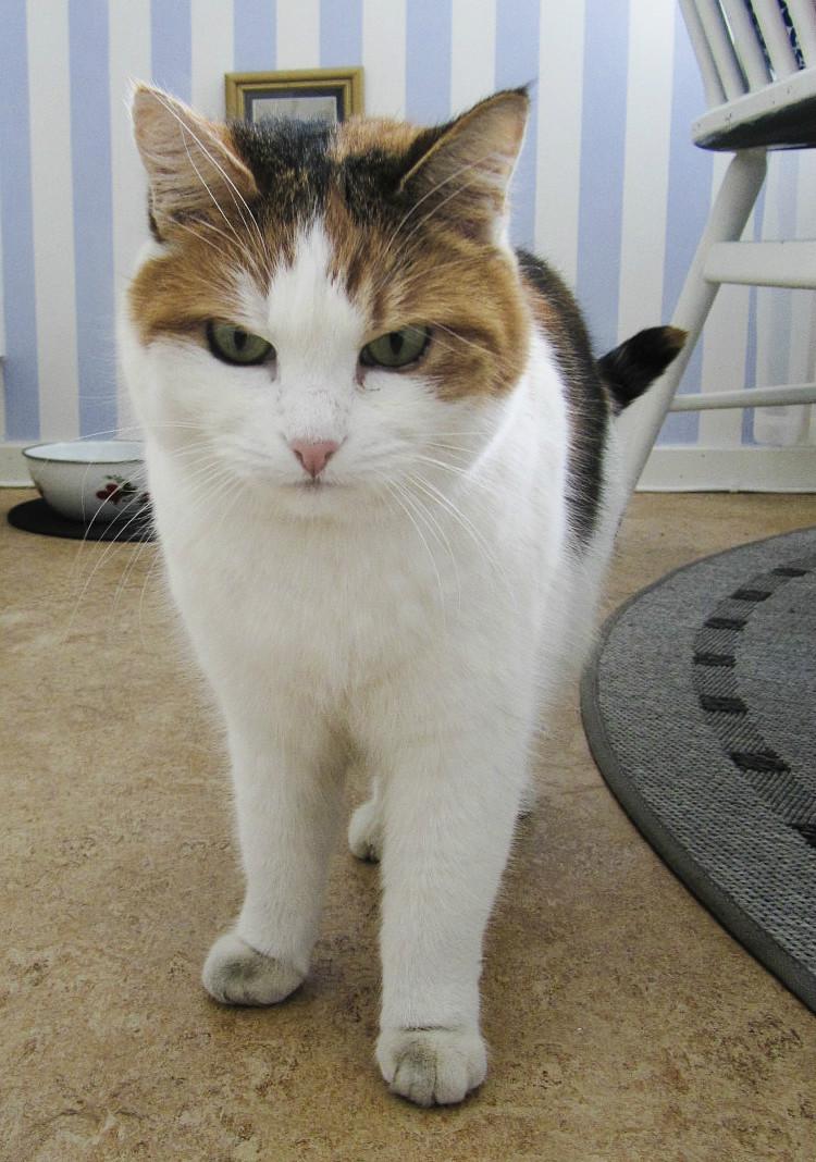 Grumpy cat, Olivia