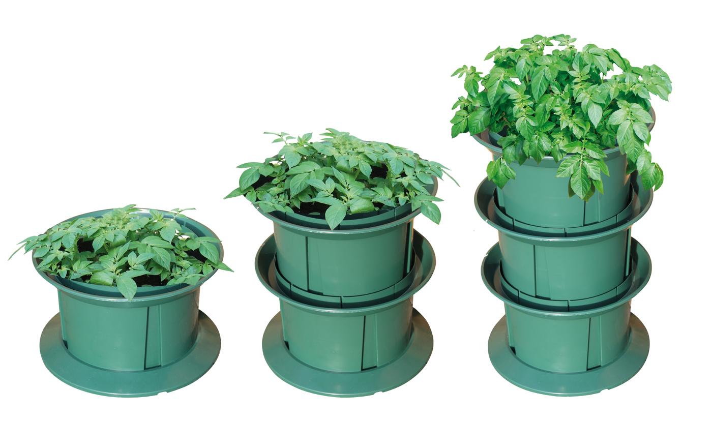odla potatis på höjden i din trädgård