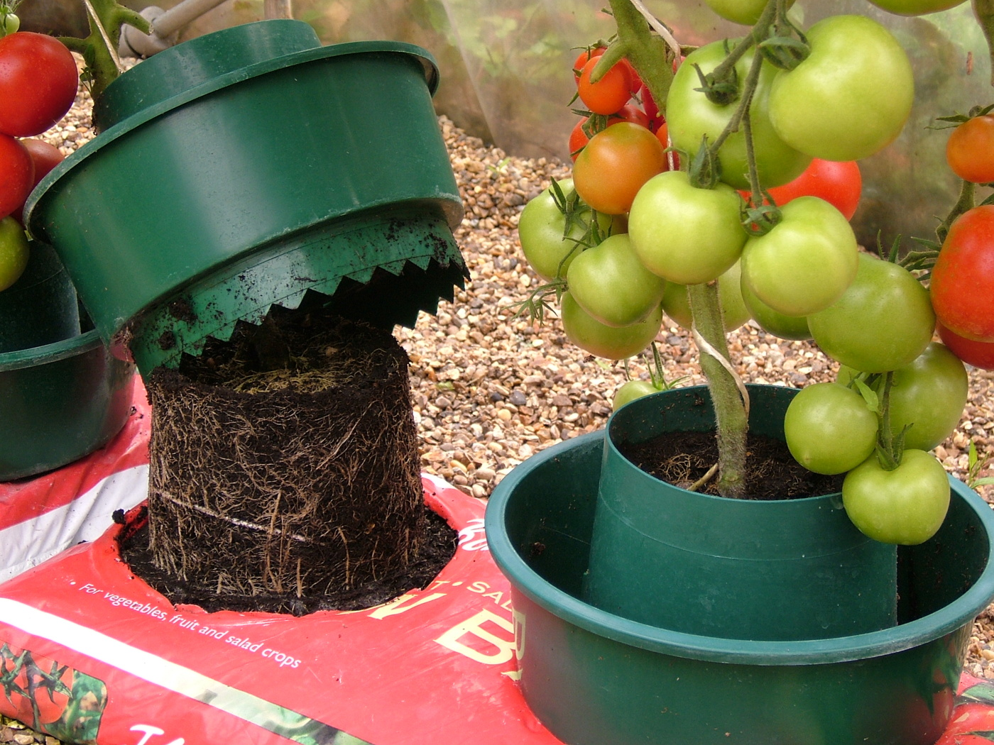 Tomat odling med odlingssystem i jordsäcken