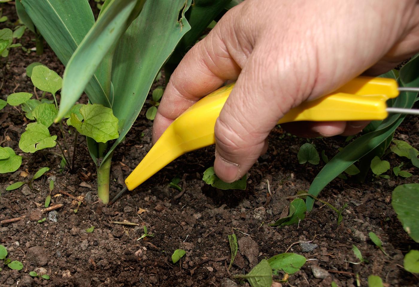 Lucko rensar ogräs och luckrar i rabatt