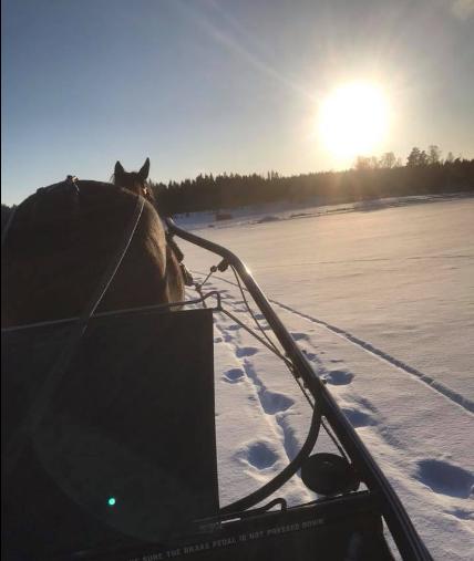 Vinter på Lövnäs, 28 februari!