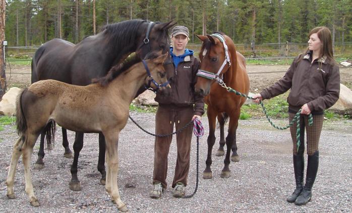 Kärstins Hästar