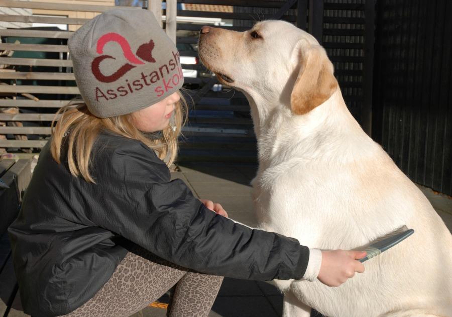 Hund hjalpmedel och kompis
