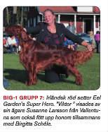 Viktor vinner Grupp 7 Internationell utställning Gimo, 17 månader gammal