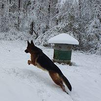 Någon som gillar snö.