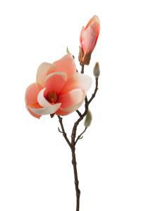 Konstväxt Magnolia rosa -