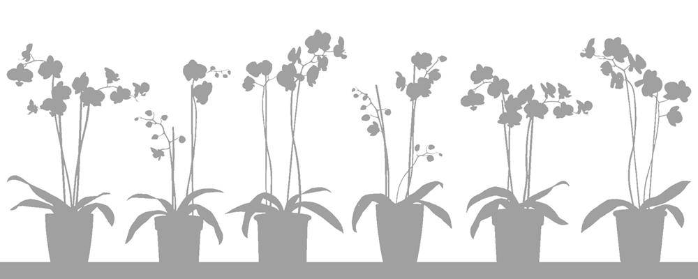 Fönsterfilm Orkidé