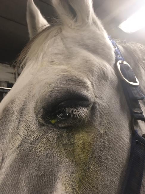 Svullet öga häst