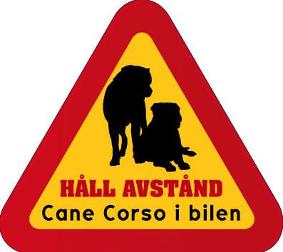 Cane_corso_2