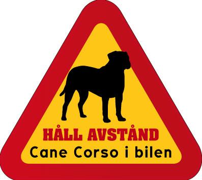 Cane_corso_3