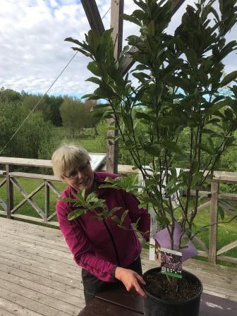 Eva Stenvång Lindqvist avtackades med en tjusig mangolia. Foto: Tom Arnbom