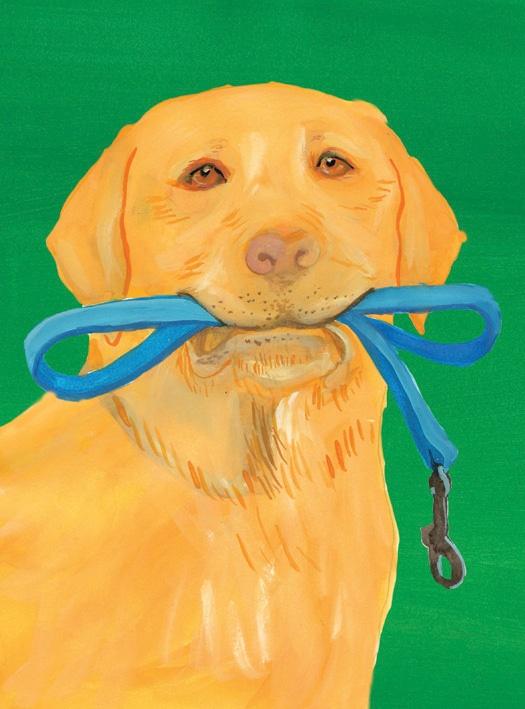 Everyday-dog-image