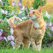 13 bitar pussel Nyfiken katt