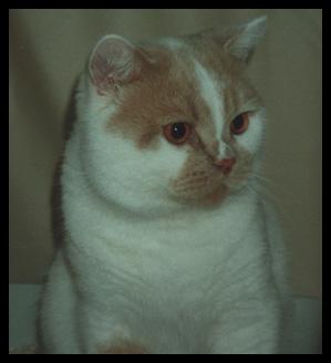 Suncat's Aha f 1998