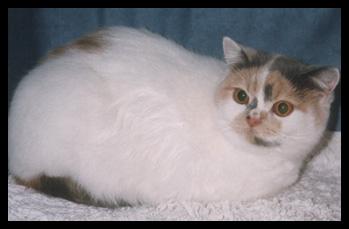 Suncat's Layla f 1998