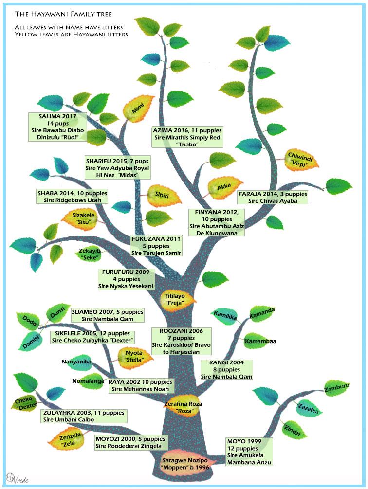 Kennel Hayawanis släktträd,alla namngivna hundar har avkommor och gula löv är våra Hayawanihundar som gått vidare i avel.