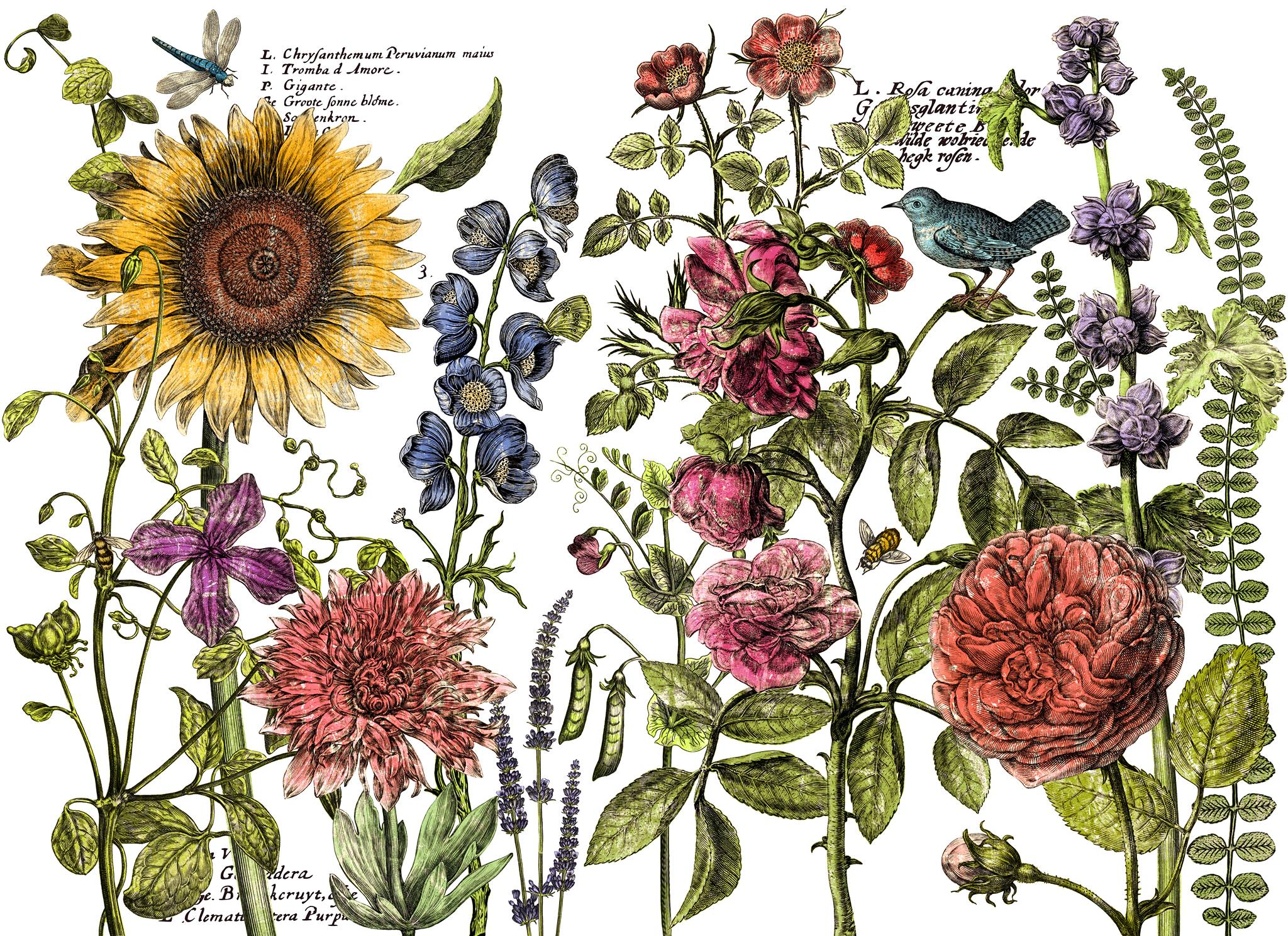 Botanists´s Journal