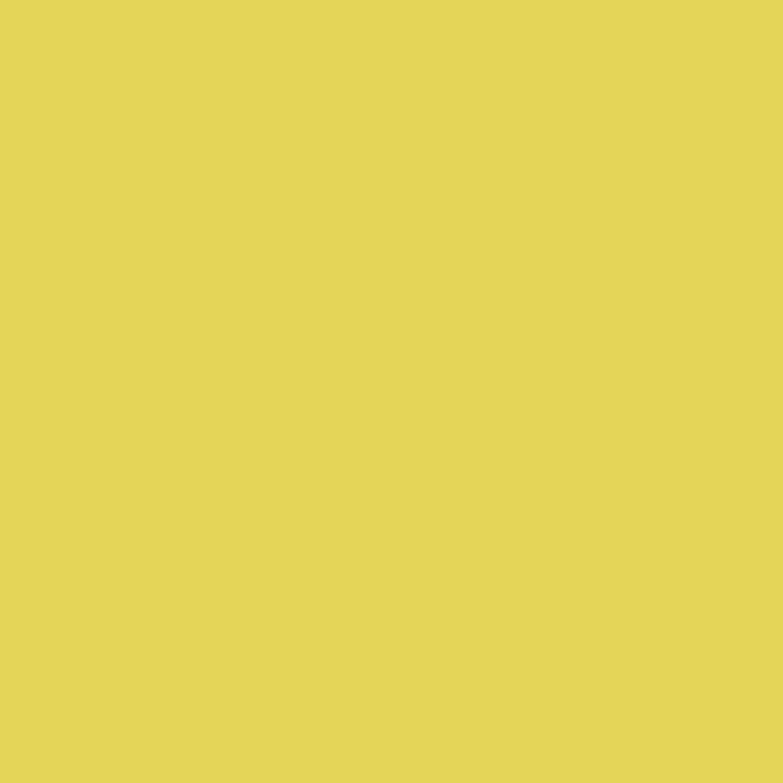 Daisy -  Vibrant Yellow