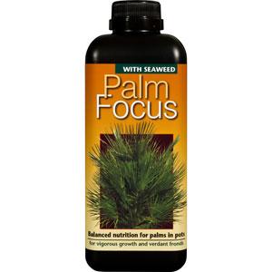 PalmFocus