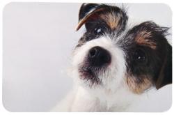 Matskålsunderlägg Hundbild, 43 x 28 cm  - Matskålsunderlägg Hundbild, 43 x 28 cm