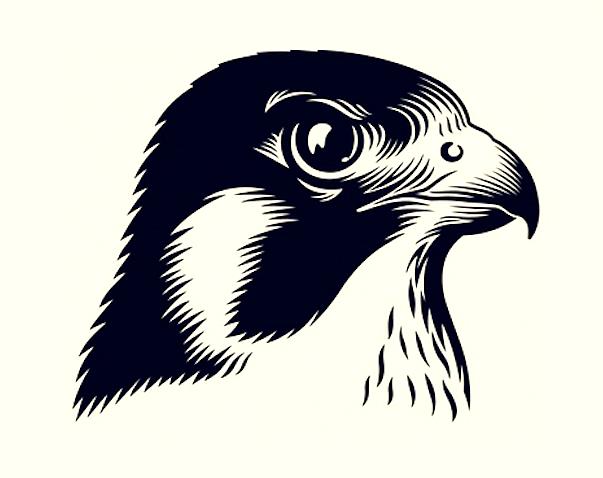 Grundillustration till Falcon öl.