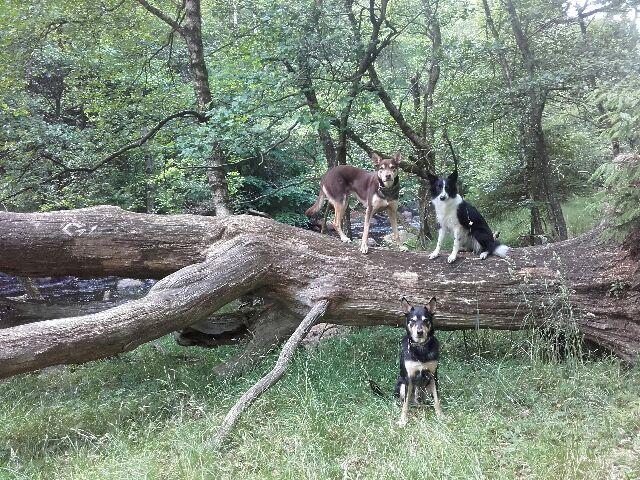 """Ett vackert naturreservat i grannbyn som jag troligen aldrig hade upptäckt om det inte vore för att hundarna ändå skulle rastas... Egentligen är det helt fel att säga att hundar tar tid, med tanke på hur mycket kvalitets- och hälsofrämjande tid som de """"ger""""!"""