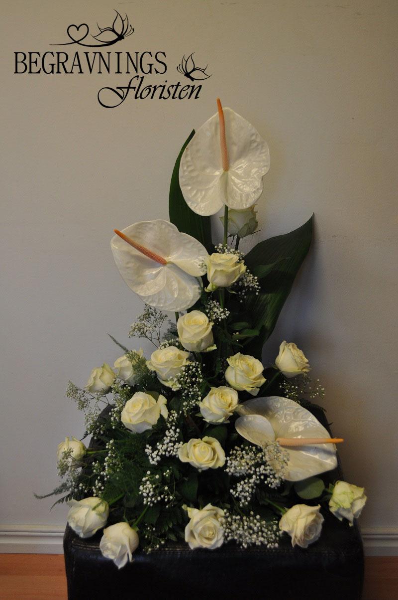 begravningsblomma-vit-ros-anthurium
