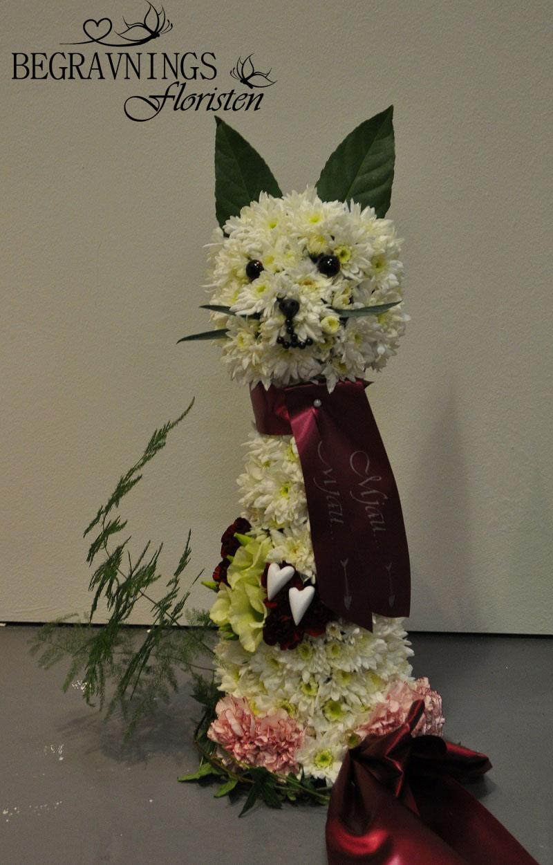 Katt-av-blommor-kryssantemum