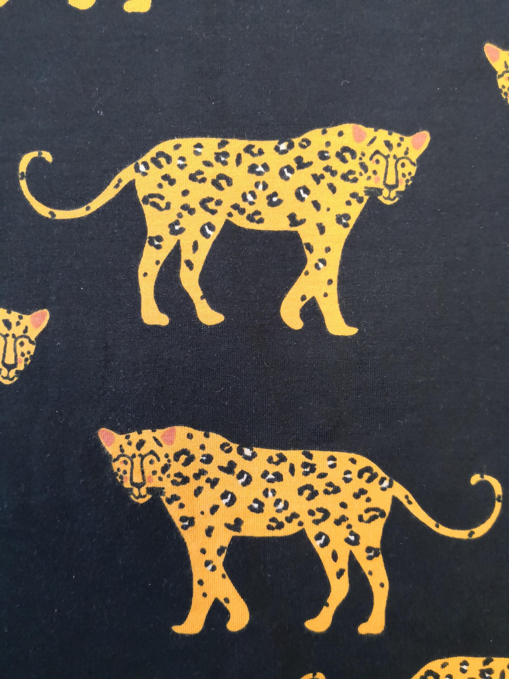 Leopard på svart botten närbild