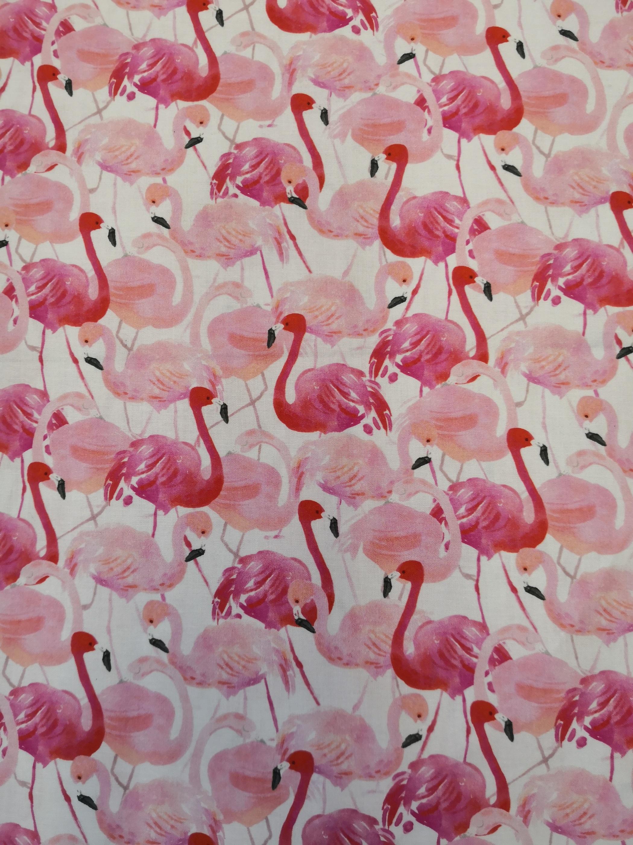 flamingos rosa närbild