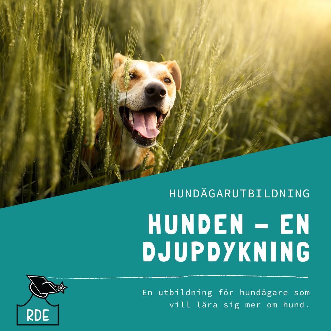 Kopia av Kopia av Hunddagisutbildning-2
