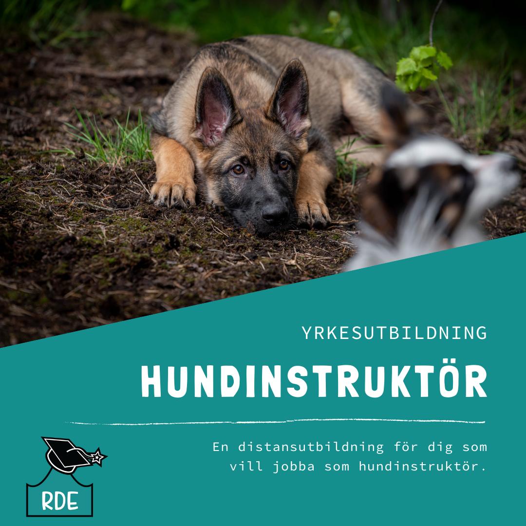 Hundinstruktörsutbildning