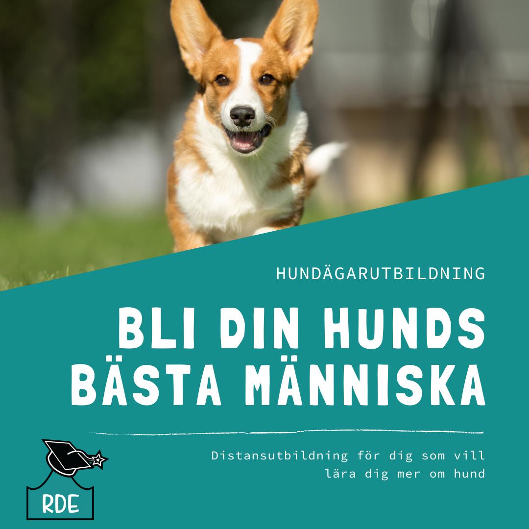 Hundägarutbildning-2