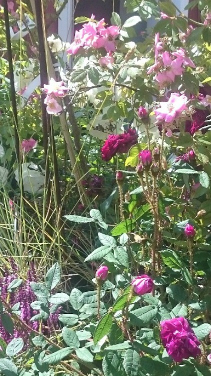 Trädgårdsskötsel Halland. Känsla för trädgård i Varberg hjälper dig med skötsel av din trädgård Varberg, Kungsbacka, Falkenberg, Halmstad - Halland