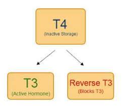 Sköldkörteln - rT3 -Reverserad T3 inkl 20 min konsultation