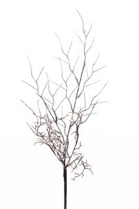 Kvist med snö