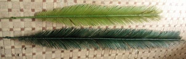 Palmblad i set