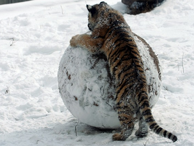 Snöbollsmetoden ger större och större amorteringsmöjlighet.