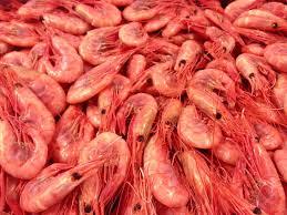 Greenland prawn/shrimp - Greenland prawns 1 kg