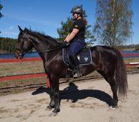 Sofie Häggblom - Juvel