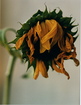 öppna trosor sunflowers massage