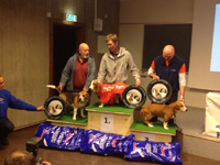 På 2.plass Lilimere Ricki til Sigmund Dehlin. Bildet er lånt fra Trøndelag Harehundklubb sin hjemmeside.
