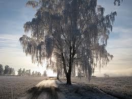 Snyggt med rimfrost på morgonkvisten