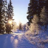 -20 grader under veckan är det kallaste den här vintern!